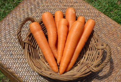 Carrots 416x284 - Carrots - First Class
