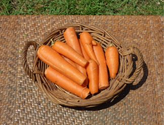 Carrots Juicing 324x247 - Carrots - Juicing