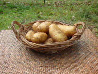 P1060844 416x312 - Potatoes - Dutch Cream
