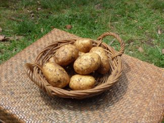 P1060923 324x243 - Potatoes - Sebago
