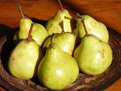 Packham pears 416x312 - Pears Packham Kilo Buy 1kg