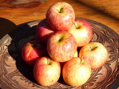 apples gala 416x312 - Apples - Gala
