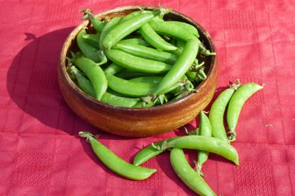beans green 416x277 - Sugar Snap Peas