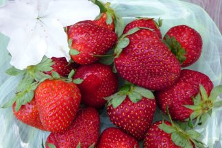 strawberries 324x216 - Strawberries