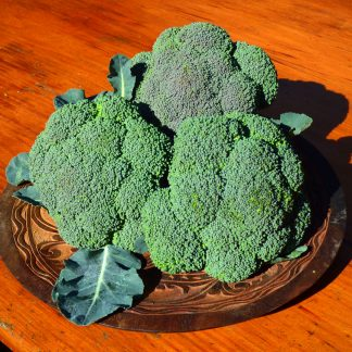 P1030247 Copy 324x324 - Broccoli  *beautiful