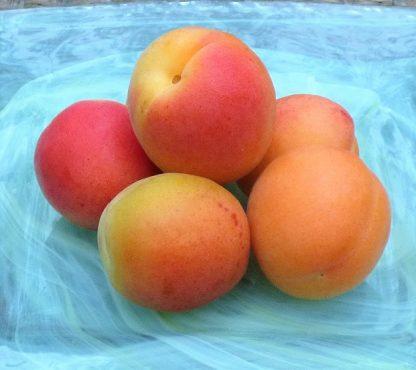 Apricots 2 416x370 - Apricots 300g  *New Season
