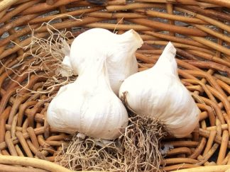 DEOSAS garlic singles for web 324x243 - Garlic - Purple/White 100g