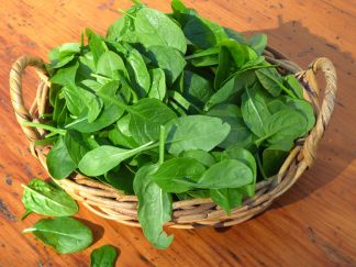 English Spinach 324x243 - Spinach - English Baby