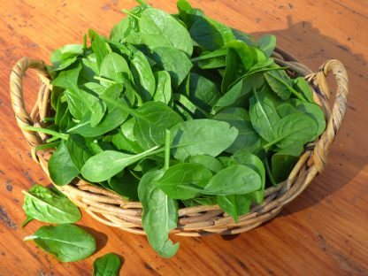 English Spinach 416x312 - Spinach - English Baby 120g