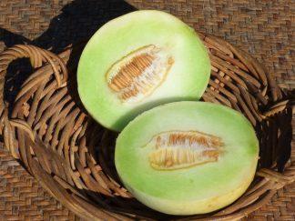 Honeydew Melon 324x243 - Honeydew Melon - Medium