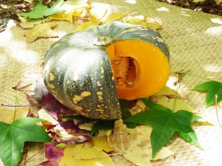 Jap Pumpkin 324x243 - Pumpkin - Jap Whole