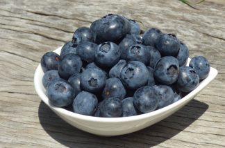 P1060796 324x214 - Blueberries