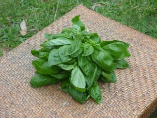 P1070191 324x243 - Sweet Basil - bunch