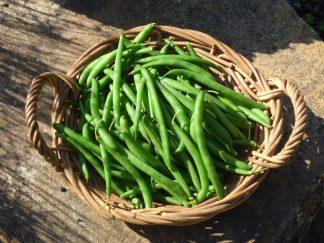 P1070253 324x243 - Beans - Green
