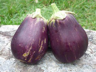 P1070307 324x243 - Eggplant