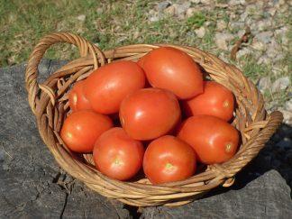 P1070418 324x243 - Tomatoes - Roma