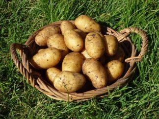 P1080386 324x243 - Potatoes Gourmet Chats- Dutch Cream