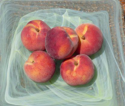Peaches Yellow 416x352 - Peaches - Yellow