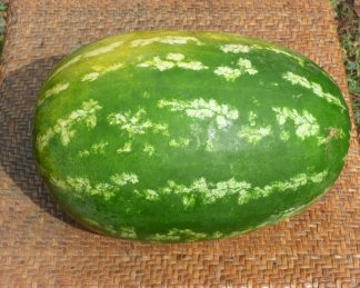 Watermelon Whole2 324x259 - Watermelon Red - whole (8kg approx.)