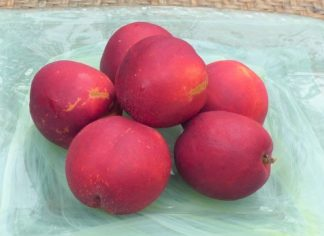 nectarines 2 324x236 - Nectarines - Yellow