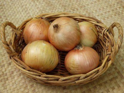 onion 416x312 - Onions - Brown