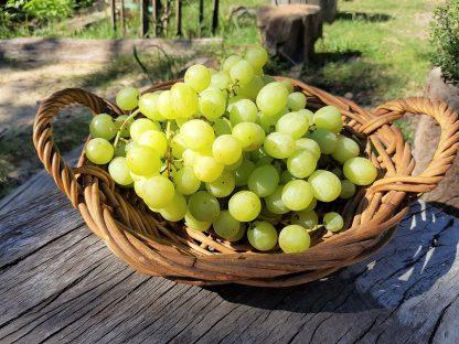 Grapes mendindee seedless 416x312 - Grapes - Green Muscat Seedless
