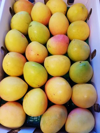 Mango trays class 1 324x432 - Mangoes - Kensington Pride Tray