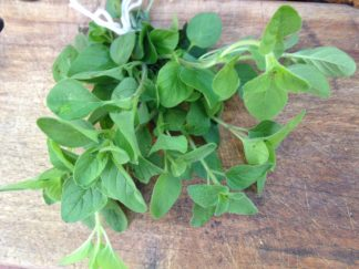 IMG 0600 324x243 - Fresh Oregano sprig