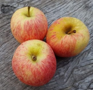 apples gala new season 324x316 - Apples - Gala 500g