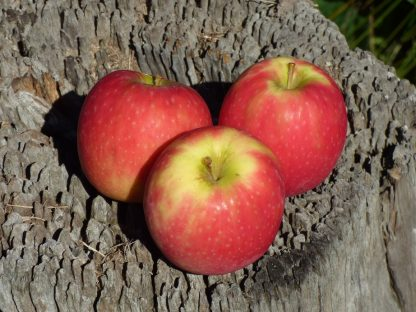 pink lady 416x312 - Apples - Pink Lady Kilo Buy 1kg