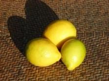Lemons Meyer 2 - Lemons - Meyer