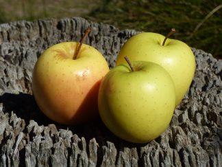 Apples Golden Delicious  324x243 - Apples - Golden Delicious