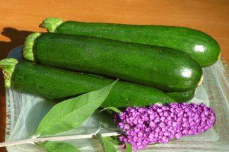 zucchini 1 324x215 - Zucchini