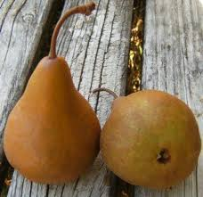 images 4 - Pears - Buere Bosc