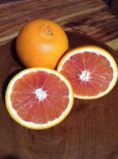 IMG 2569 416x557 - Oranges - Cara Cara