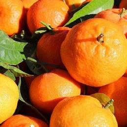 ellendale mandarins - Mandarins - Ellendale 500g